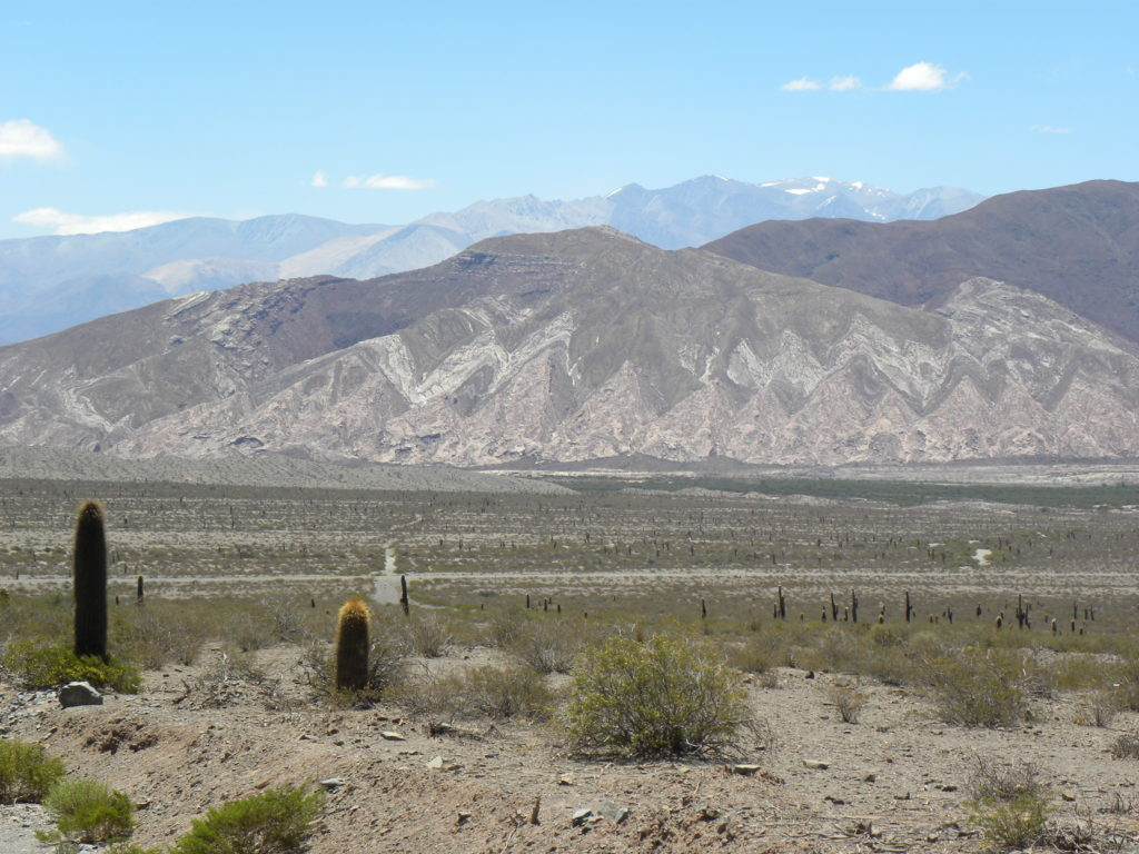 Dürre Landschaft mit zahlreichen hohen Kakteen in den Anden mit Bergformationen im Hintergrund.